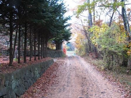 200811mugikusa315_2