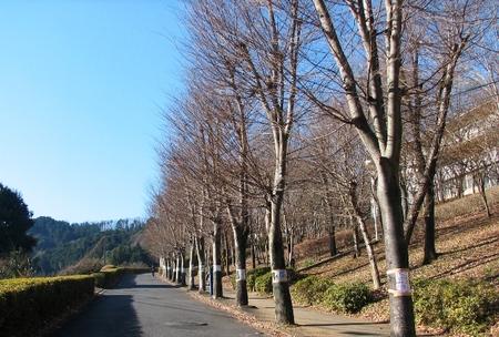 20091223ongakusai002