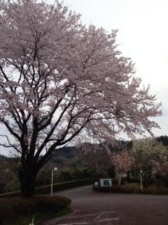 Jimori2012041523